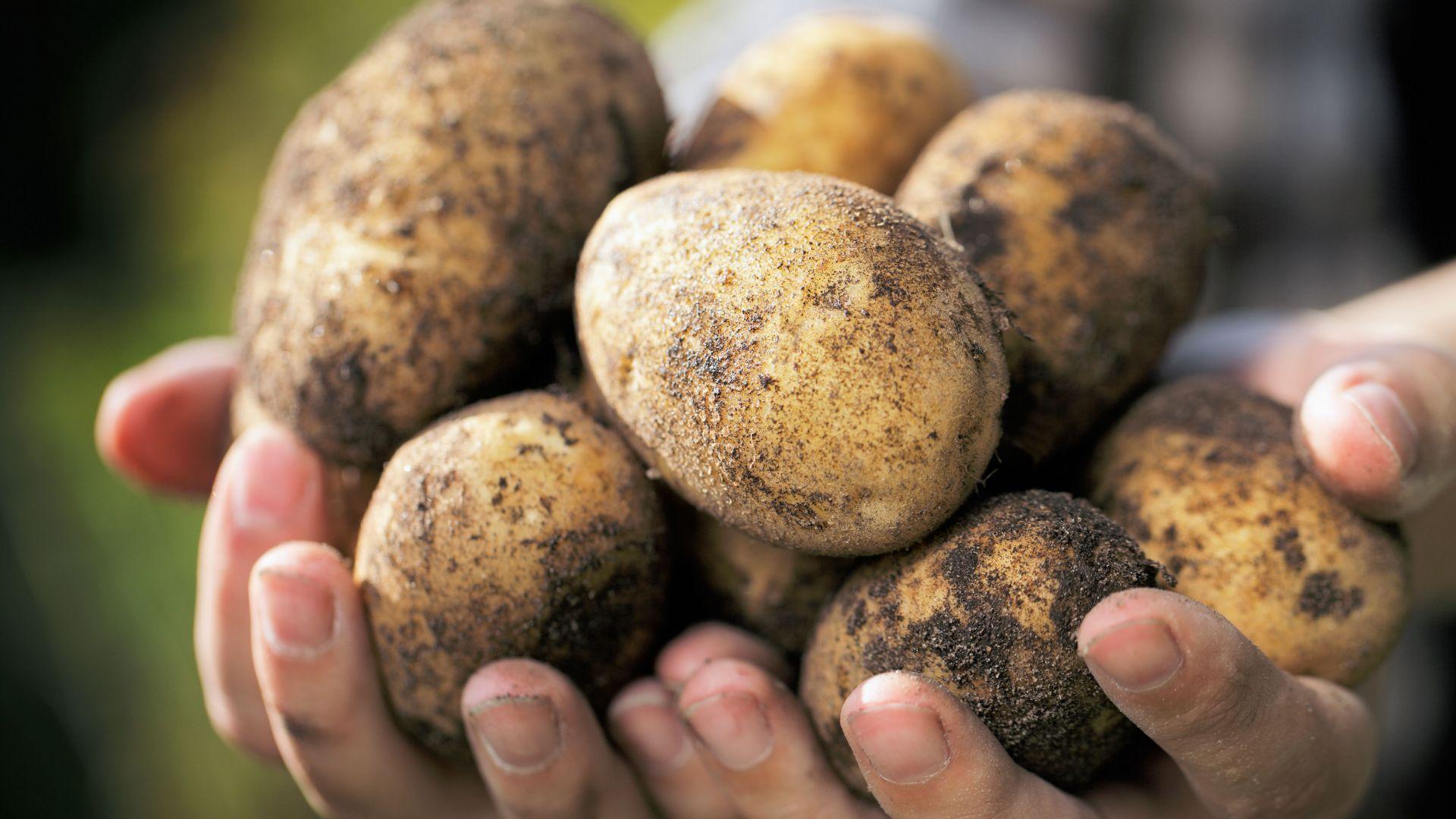 potatoes - Fylde Fresh and Fabulous